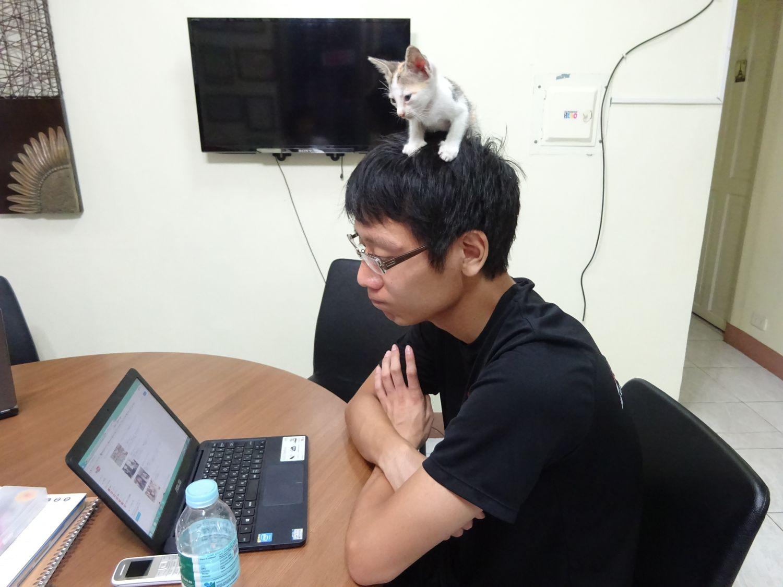 cat_08