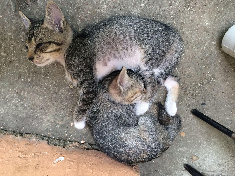 cat_12