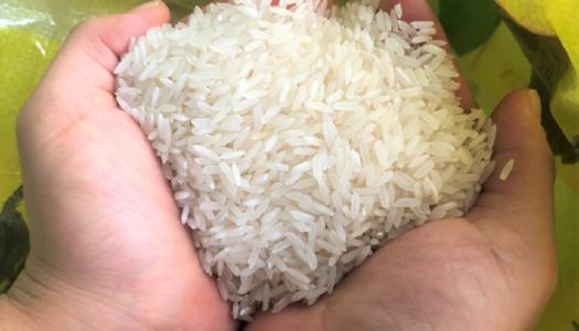 フィリピン初!低タンパク米!